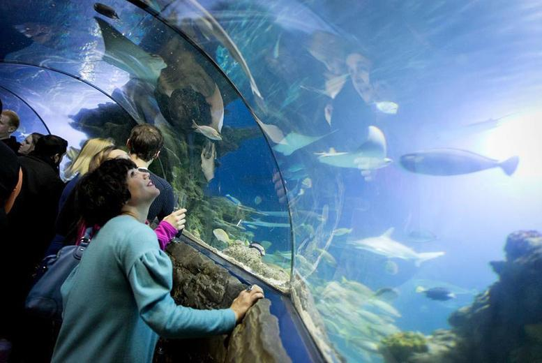 £15 instead of up to £27 for one ticket to SEALIFE After Dark at London Aquarium on 4th September 2015 including Prosecco on arrival - save up to 44%