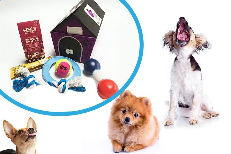 The Best Deal Guide - Surprise Toy & Treat Dog Hamper