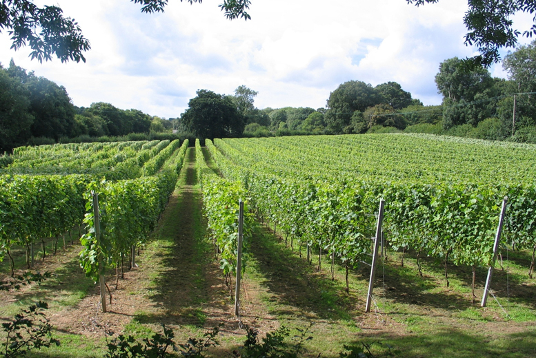 £10 instead of £20 for a two-hour vineyard tour for one person including a wine tasting, or £19 for two people at English Oak Vineyard, Dorset - save up to 50%