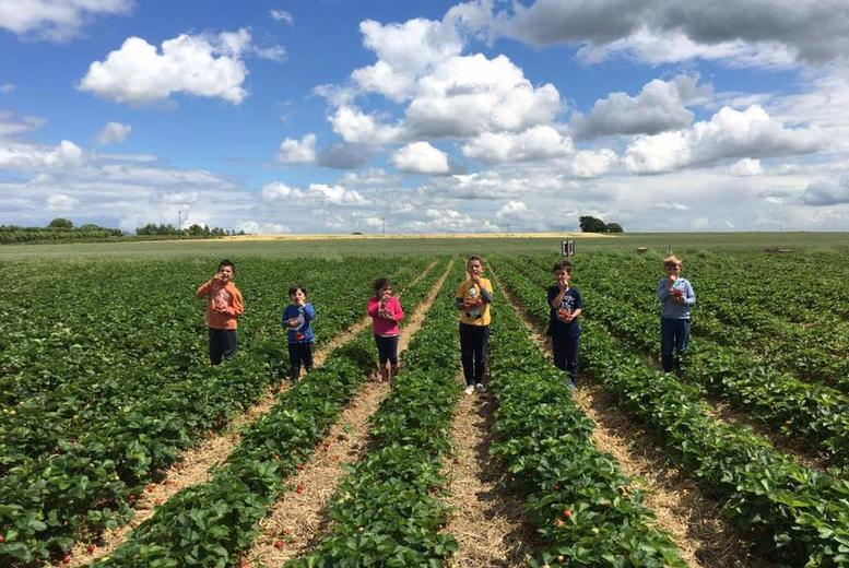 Strawberry Picking and Ice Cream for 2 or 4 @ Spilman Farming, York