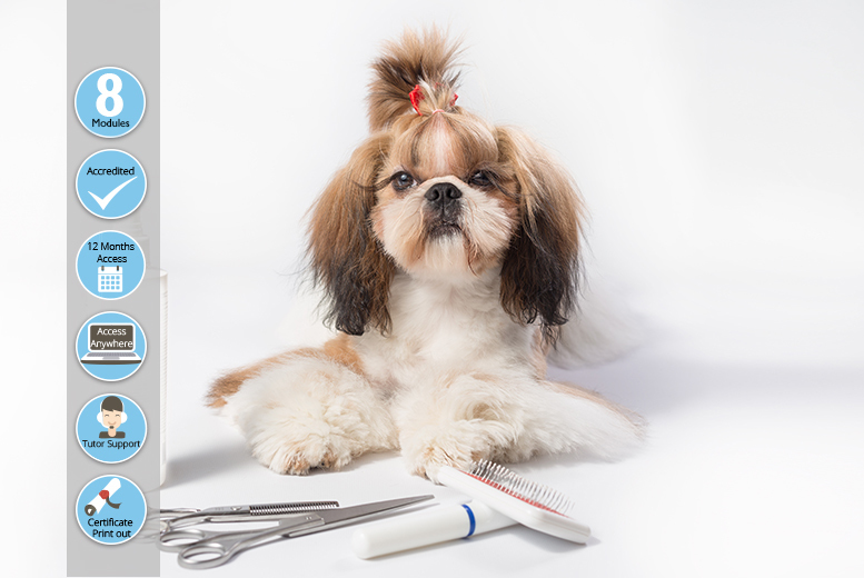 Guide to Dog Grooming Course