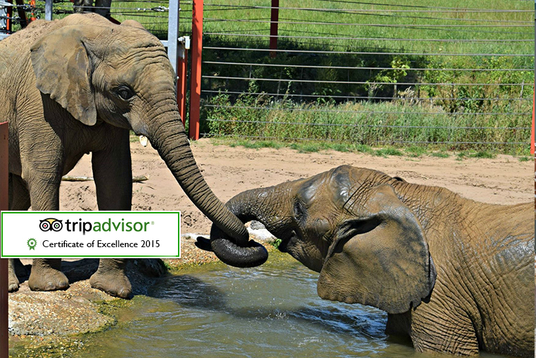 £14 instead of £28 for one adult and one child ticket to Noah's Ark Zoo Farm in Bristol, £17 for two adults - save up to 50%
