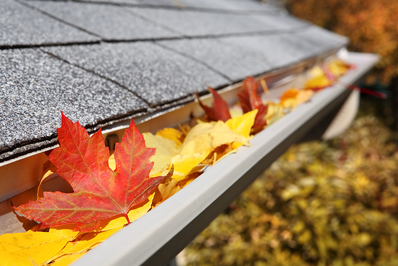 From £29 for gutter cleaning and pre-winter drainage check from Dyno-Rod, East Midlands - save up to 52%