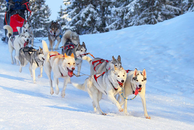 3 5nt Lapland Flights Amp Breakfast With Optional Husky Sled Ride Travel Wowcher