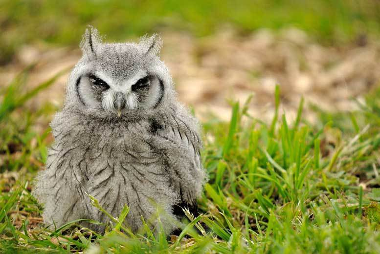 Bristol: 2hr Owl Handling Experience for 1 or 2 from £18