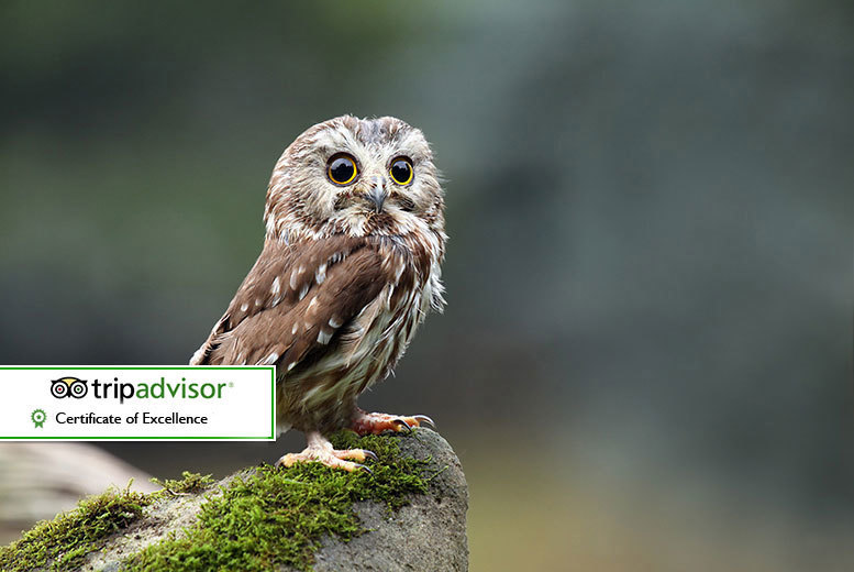 Bristol: Bird Of Prey Experience & Cream Tea for 2 from £39