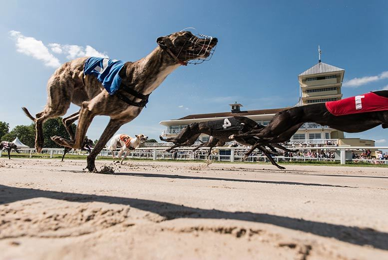 London: Towcester Races, Beer & Burger – 2 Or 4 People! from £12