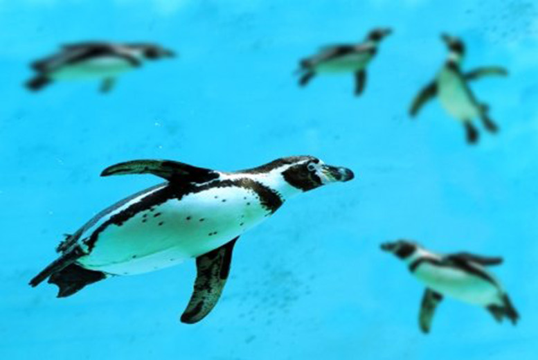 £17.50 instead of £45 for an 'unlimited' winter family pass to St Andrews Aquarium, Fife - save 61%