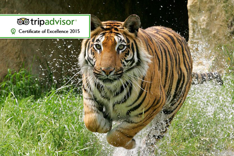 £11 for a child ticket or £13 for an adult ticket to Paradise Wildlife Park, Broxbourne