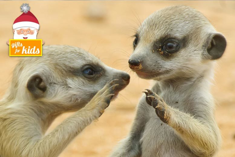 £20 instead of £50 for a 'Meet the Meerkats' experience for one person, or £34 for two people at Hawks of Steele, Thoresby Park - save up to 60%