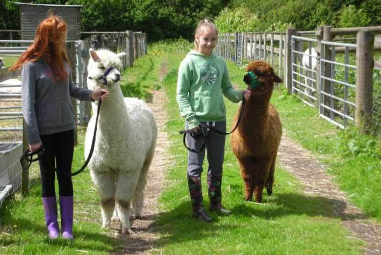 Southampton: 2hr Pennybridge Alpaca Experience for 2 from £25