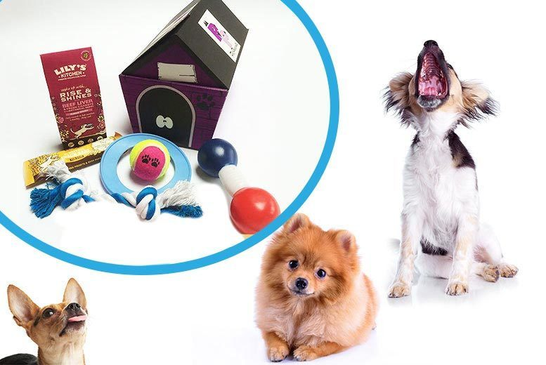 Leicester: Pet Presents Surprise Toy & Treat Dog Hamper from £8