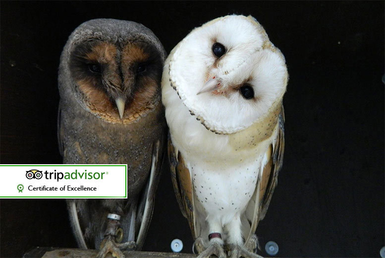 Newcastle: Twilight Owl Experience for 2 or 4 @ Kirkleatham Owl Centre from £29