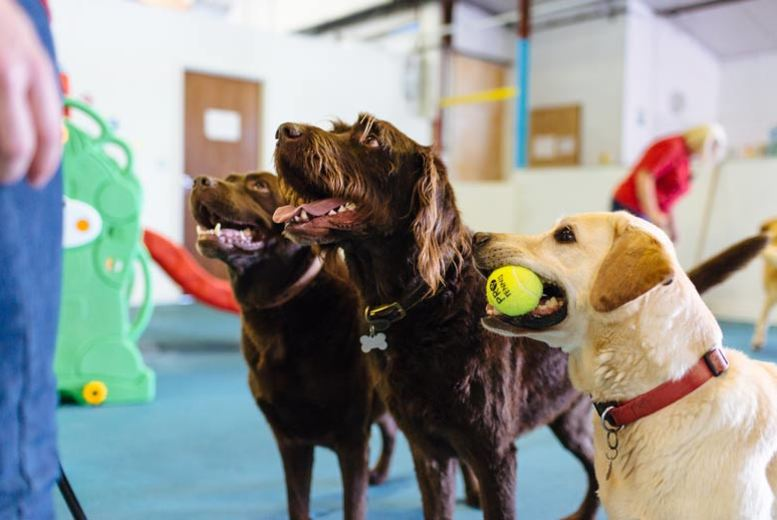 Lincolnshire: 5-Day Doggy Day Care @ Lincoln Canine Creche for £39