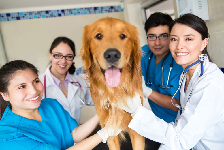 Careers that deals with animals