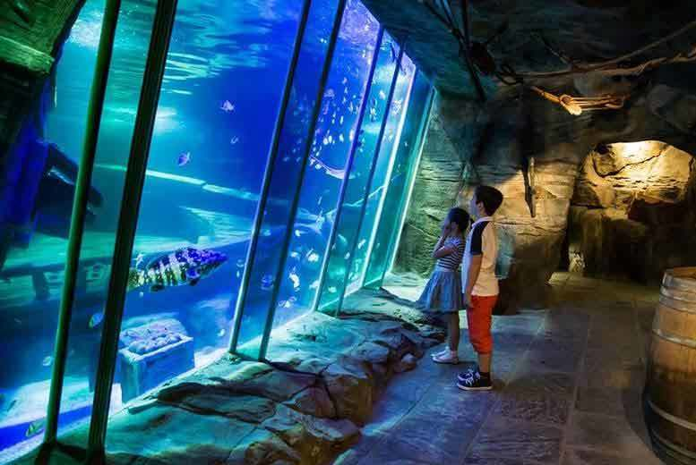 Belfast: Exploris Aquarium Experience & Lunch for 1 or 2 from £13