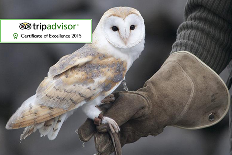 From £12 for a one-hour owl experience or from £19 for a two-hour falconry experience at Hawks of Steele, Thoresby Park - save up to 66%