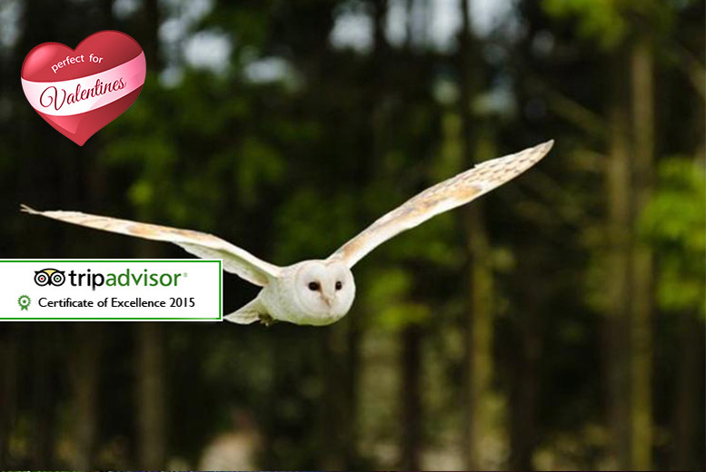 £32 for a two-hour owl experience for two with access to Kirkleatham Owl Centre and afternoon tea