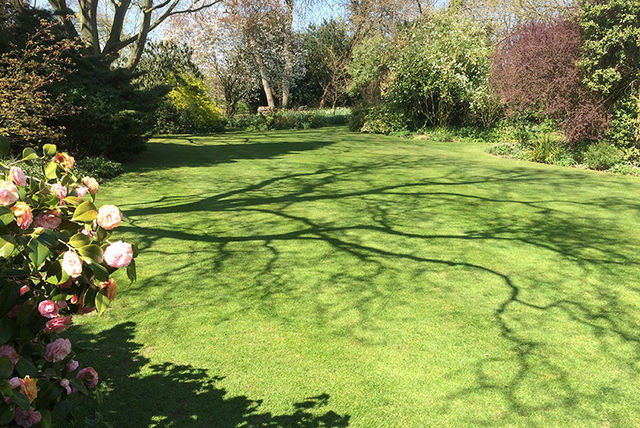 Spring Lawn Treatment Package