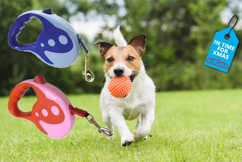 Auto Retractable Dog Lead – 2 Sizes & Colours! from £6.99