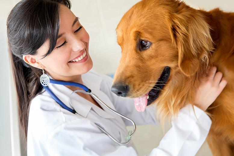 £24 instead of £299 (from International Open Academy) for an ICOES-accredited online veterinary support assistant course - save 92%