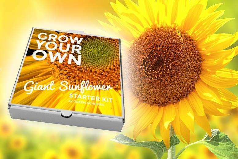 Grow Your Own Kit – 2 Options! for £5.99