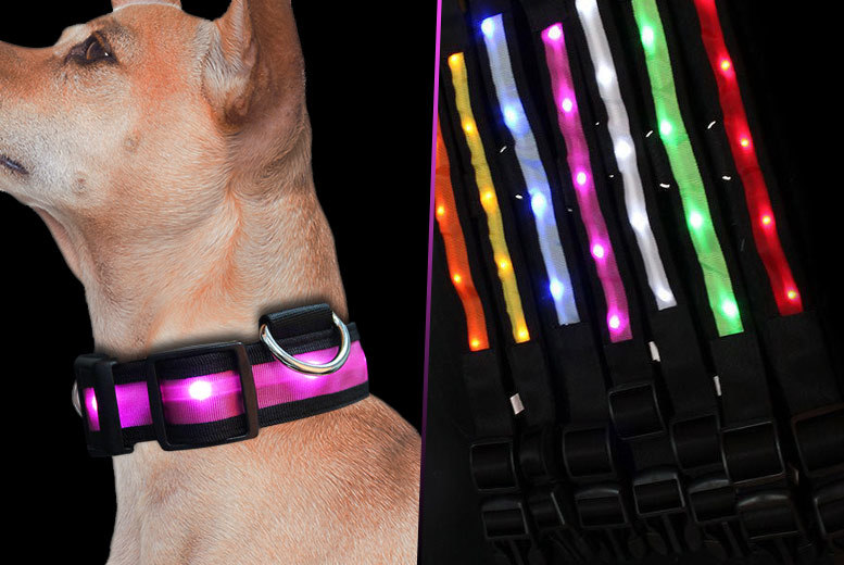 £2.99 instead of £16.99 (from EF Mall) for an adjustable LED light up pet collar - choose from two colours and save 82%