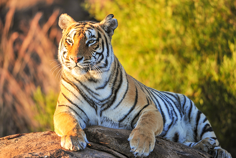 From £99 (from Superbreak) for a Cheshire stay with breakfast and Cheshire Zoo tickets for two, from £119 for a family of three or from £129 for a family of four