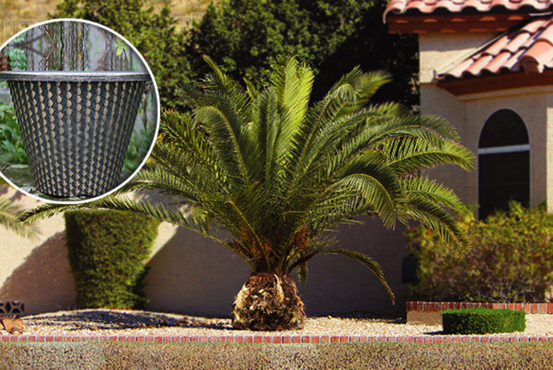 £26.99 instead of £49.98 for two Canary Island palm trees and two five-litre, metallic-effect plant pots - save 46%