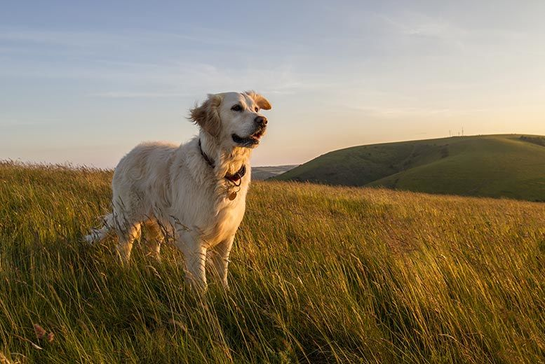 £45 for a three-day weekend country retreat for dogs from My Dog Sitter, Feltwell!