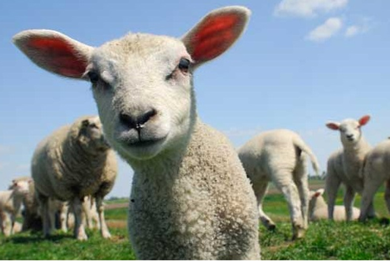From £4.50 for a ticket to Lower Drayton Petting Farm, Staffordshire during the spring half term holidays - save up to 45%