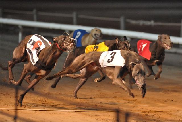 Image result for Dog Racing nottingham