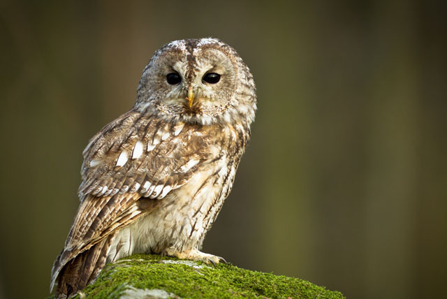 £19 for a half-day owl experience inc. a keyring for 1 or £29 for 2 people at the Birds of Prey Centre, Bedford