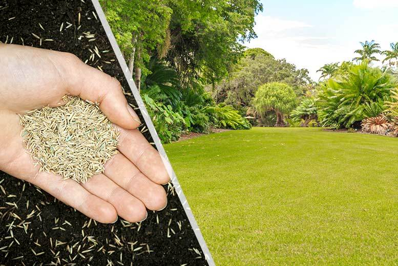 £5.99 instead of £7.99 (from Dobies of Devon) for a bag of rapid green self-repairing lawn seed, £9.99 for two bags - save up to 25%