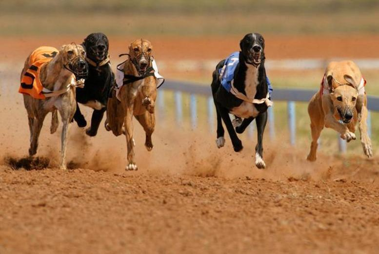 £8 for a night at the dog races for two with a choice of drink, burger and programme each from Love The Dogs - choose from two locations and save up to 74%
