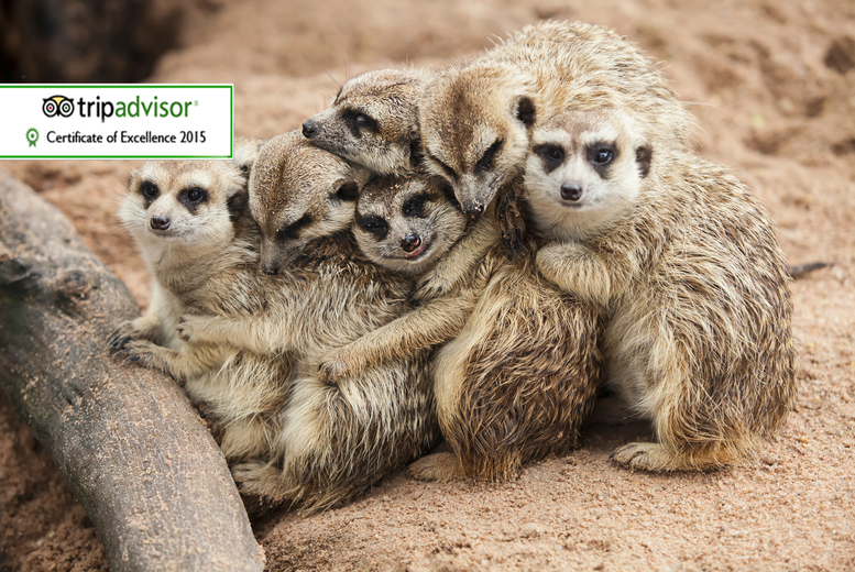 £39 instead of £99 for a one-hour meerkat experience for two people at Will's Wild Animal Encounters, Telford - save 61%