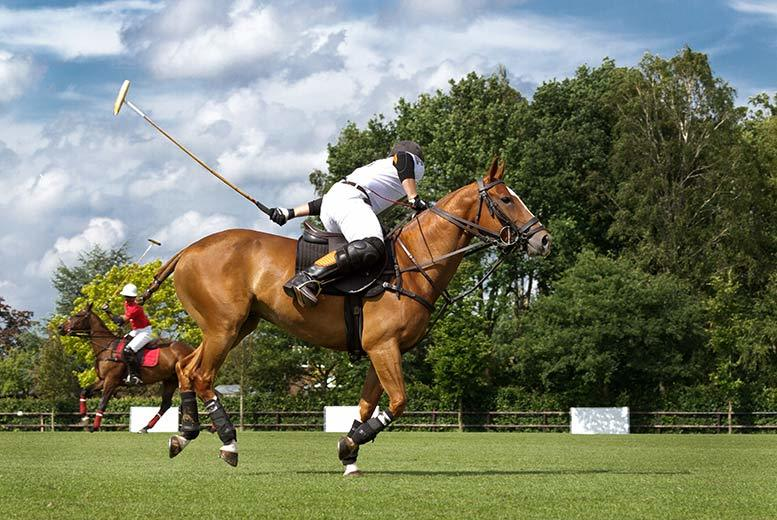 £169 for a Discover Polo horse riding experience at Westcroft Park Polo Club & Academy, Surrey, from Activity Superstore - learn to play the sport of princes!