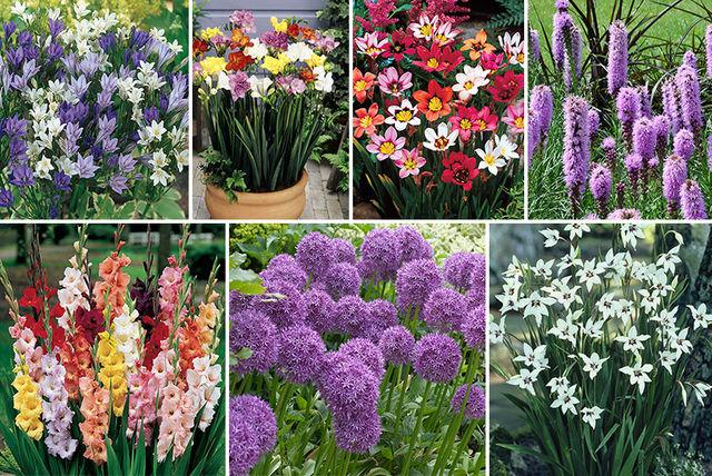 Wowcher Garden Shopping Deals Save Up To 80