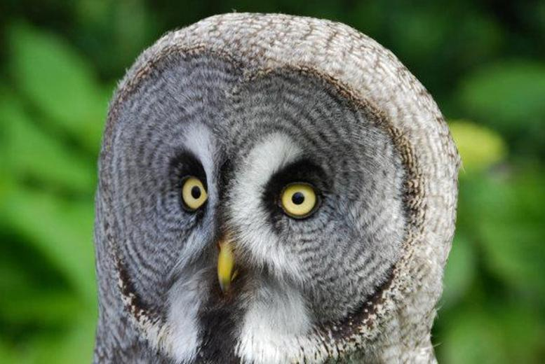 £9 for entry to the Scottish Owl Centre for two people, £17 for four or £23 for six - have a hoot and save up to 40%