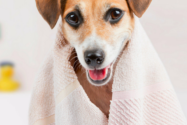 Ultimate Dog Grooming Online Course for £16.00