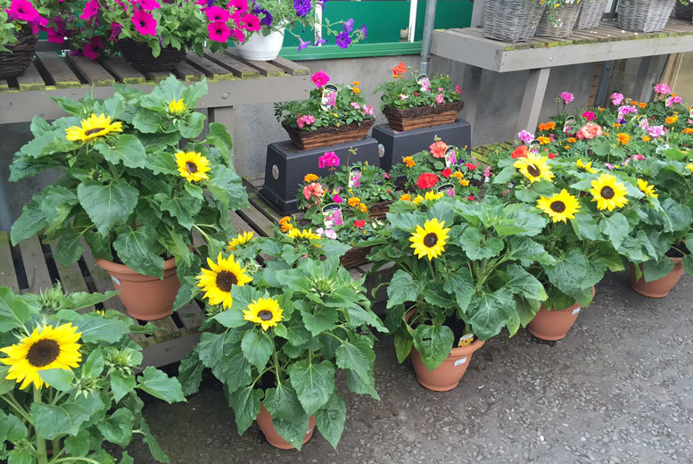 £10 for a £20 voucher to spend on garden plants at Hillmount Belfast and Hillmount Bangor - save 50%