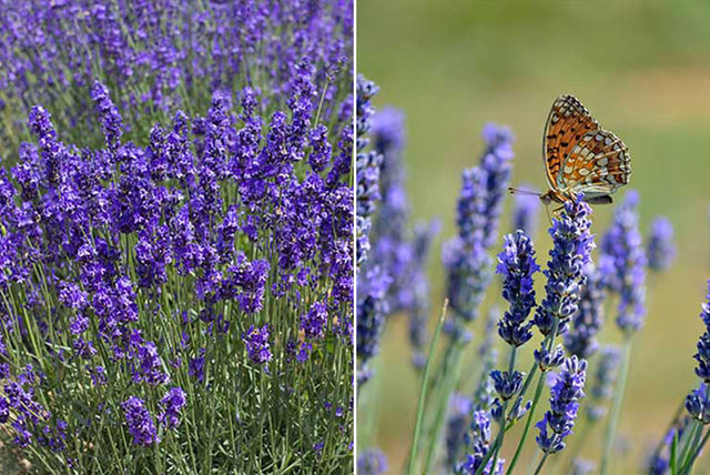 Wowcher Plants Amp Flowers Garden Shopping Deals Save