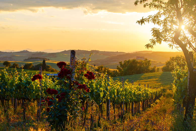 £13.50 for a vineyard and winery tour for two people at Chiltern Valley Winery  in Henley-on-Thames, Oxfordshire, from Buyagift