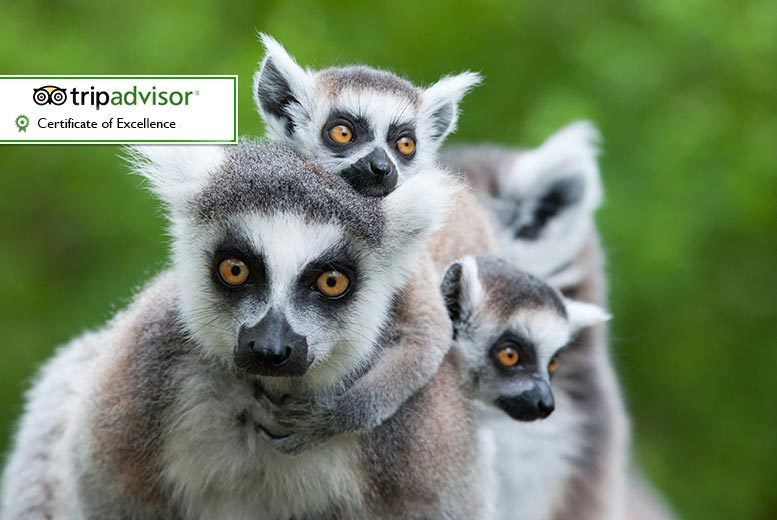 DDDeals - £59 instead of £150 for a half-day animal keeper experience for two people at Will's Wild Animal Encounters, Telford - save 61%