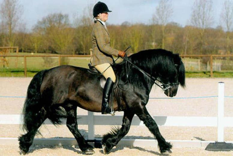 £15 for a private 30-minute horse riding lesson and one-hour group trek or hack, £28 for a shared private lesson and hack at Matchmoor Riding Centre - save up to 51%