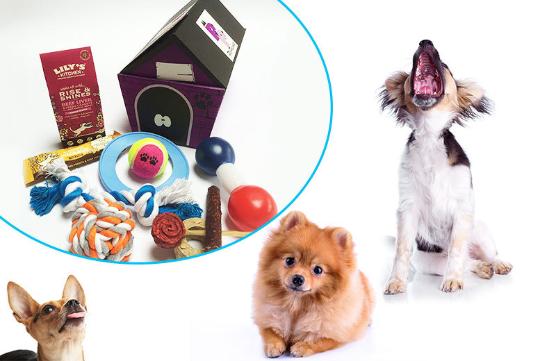 £14.99 instead of £29.04 for a toy and treat hamper for dogs from Pet Presents - save a barking 48%