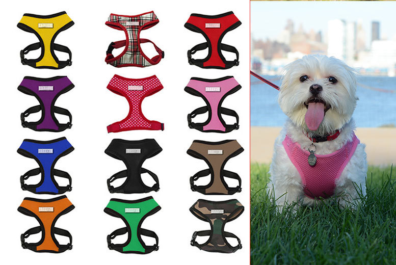 £2.99 instead of £6.99 (from Bunty Pet Products) for a mesh pet harness - choose from 12 colours and save up to 57%