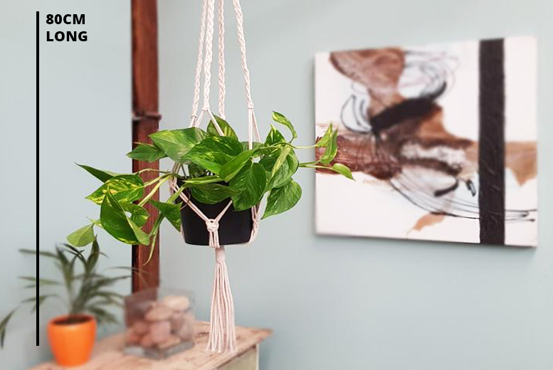 Devil's Ivy Plant & Macramé Rope Hanger for £15.99