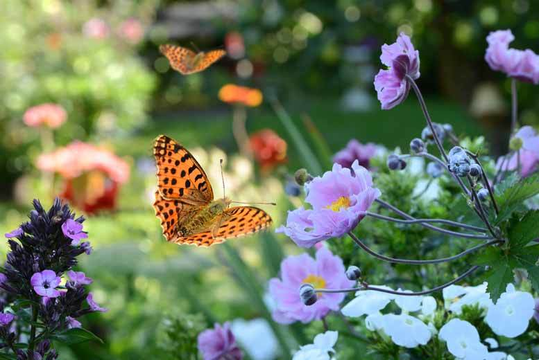 From £7 instead of £10.90 for entry for two, or £10 for four, to the North Somerset Butterfly House, Congresbury - save up to 36%