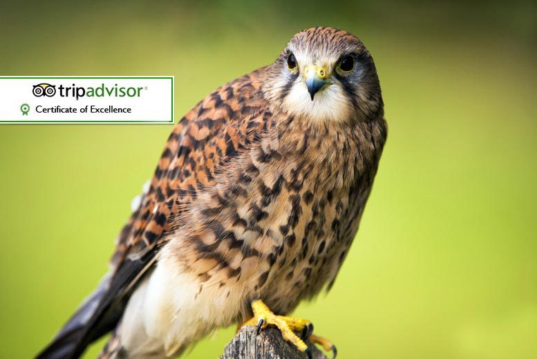 £8 for entry for two adults, £13 for two adults and two kids or £15 for two adults and three kids from York Bird of Prey Centre, Huby - save up to 50%